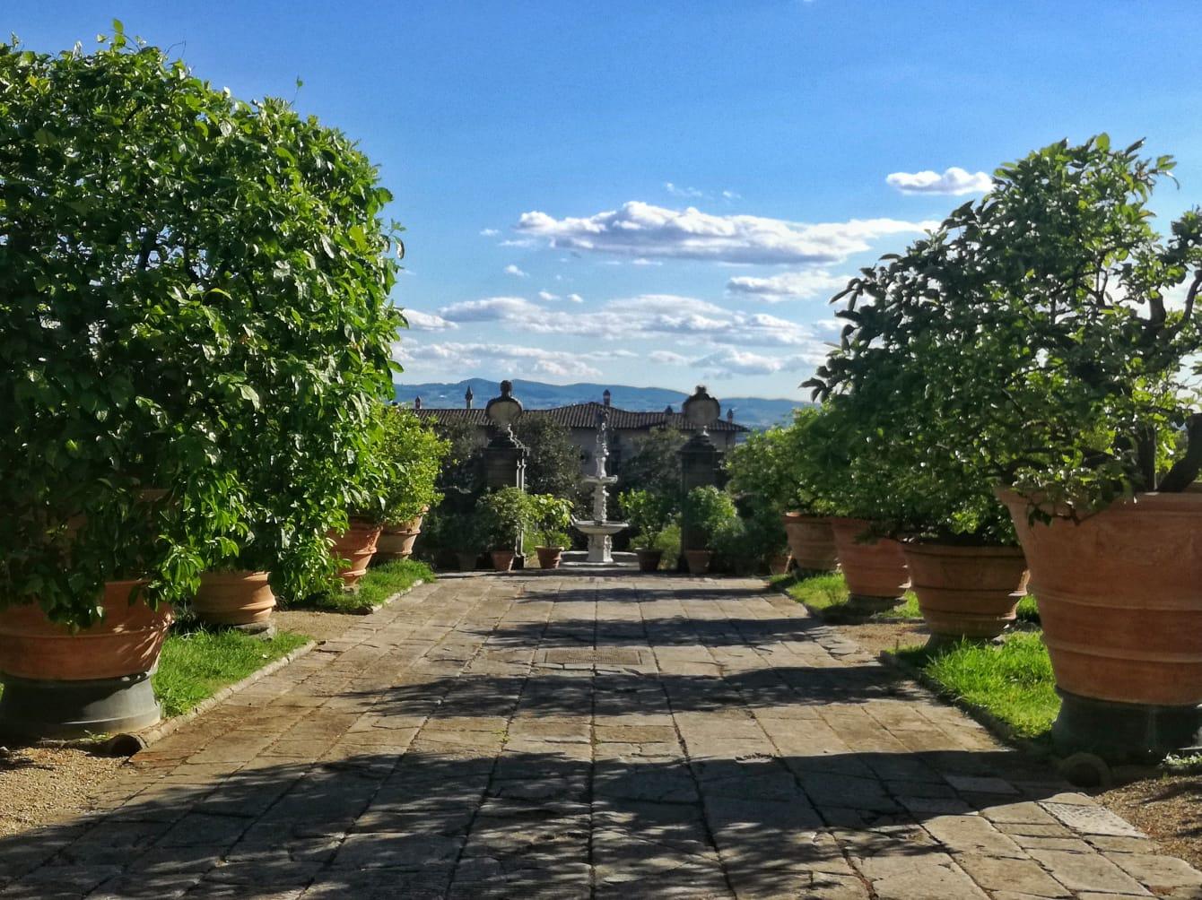agrumi medicei giardino di castello