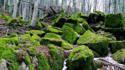 foreste casentinesi e monte sacro della Verna